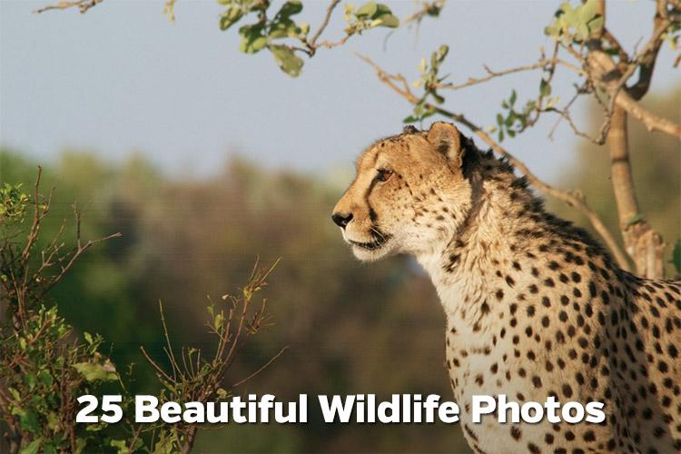 25 Beautiful Wildlife Photos