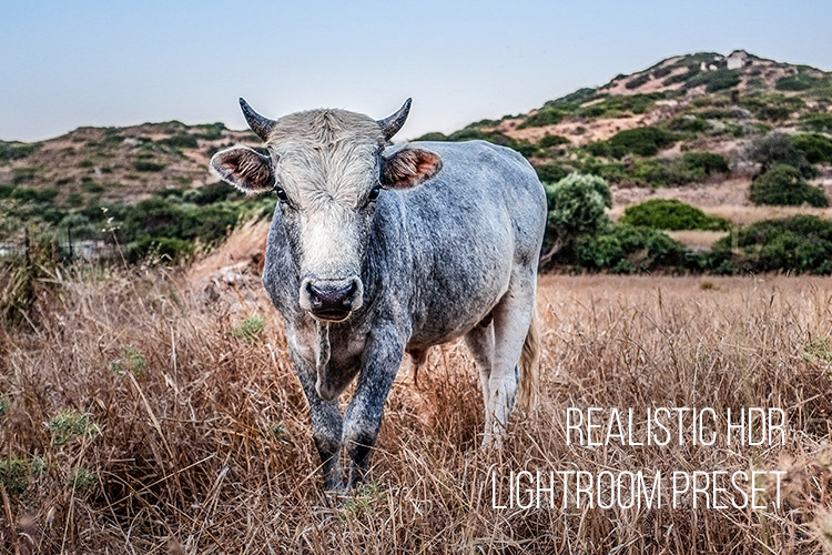Realistic HDR: Free Lightroom Preset