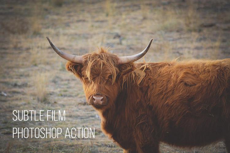 Subtle Film: Free Photoshop Action