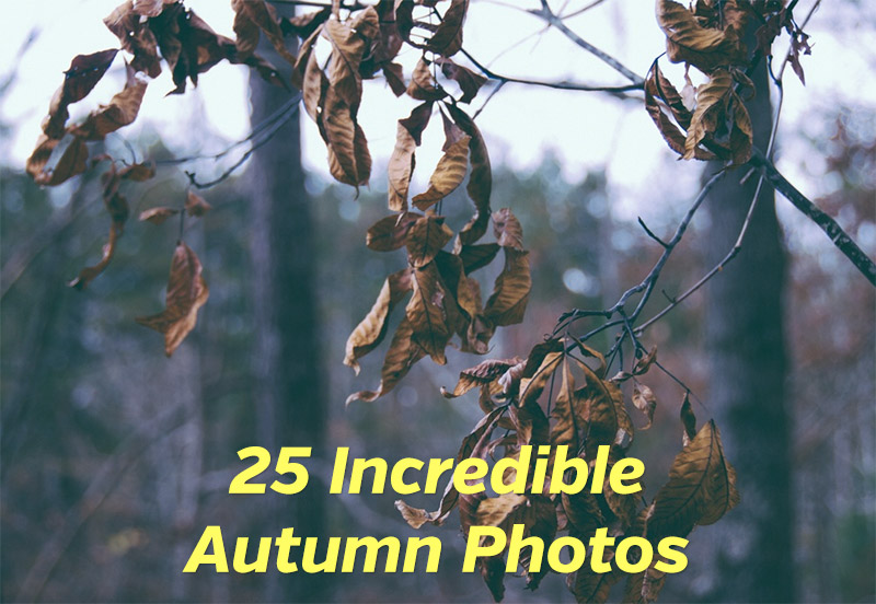 25 Incredible Autumn Photos